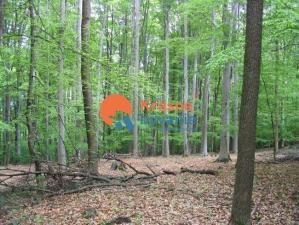 Na predaj lesný pozemok, 75% buk, Turčianske Teplice Rakša