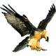 Falconsoft, s.r.o., IČO: 36837547